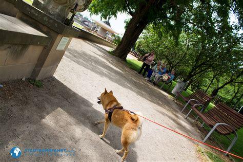 japanischer garten düsseldorf hunde erlaubt sehensw 252 rdigkeiten in dresden mit hund erkunden