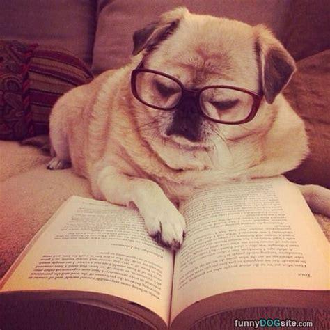 reading  book funnydogsitecom