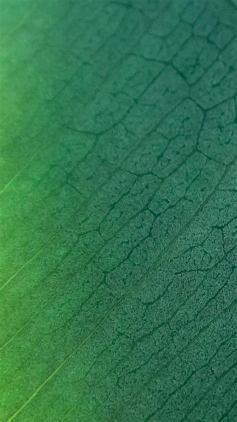 texture leaf pattern pure clear leaf texture background iphone 6 wallpaper