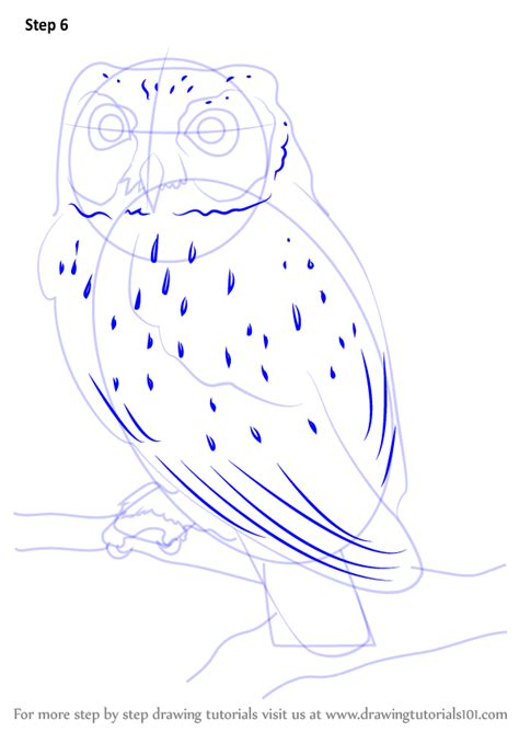 how to draw an owl learn to draw a cute colorful owl in learn how to draw a western screech owl owls step by