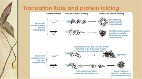 protein aggregation protein folding and aggregation