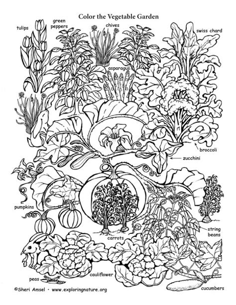 coloring pages of garden vegetables vegetable garden coloring page