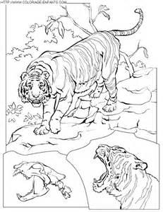 Dessin De Tigre A Imprimer Az Coloriage