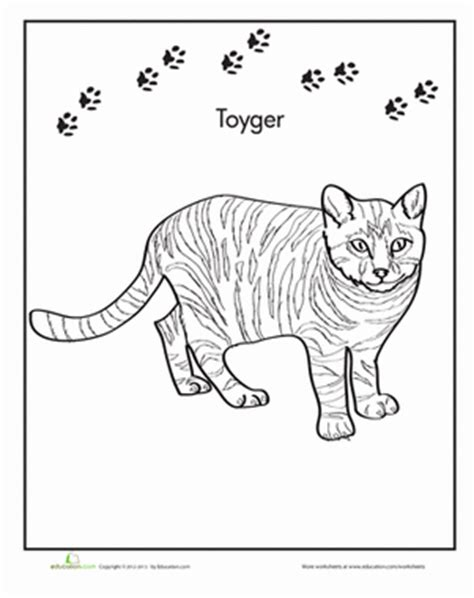 coloring pages of tabby cats toyger worksheet education com