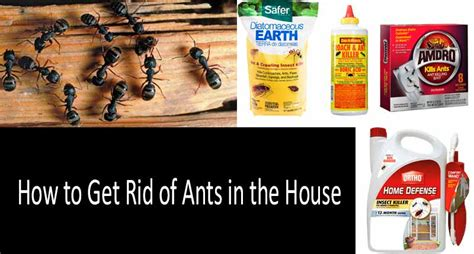 get rid of ants in house how to get rid of black ants 10 best black ant killers