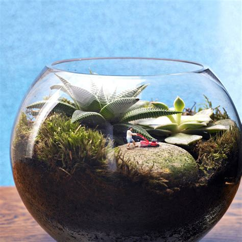 mini world terrarium kit by london garden trading notonthehighstreet com