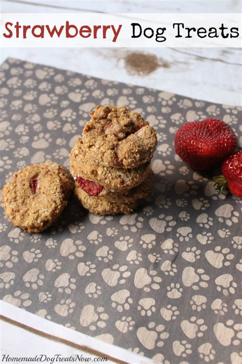 strawberries and dogs 22 diy organic treat recipes