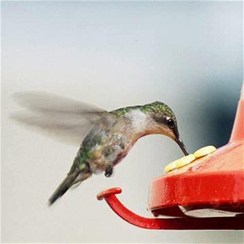 can i install hummingbird flying on a christmas tree start a hummingbird garden midwest living