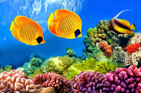 coral reef fish hd wallpapers earth
