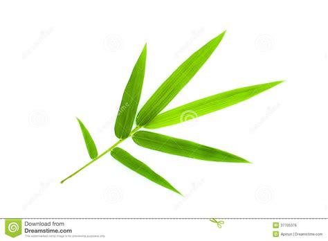 Bamboo Decoration Feuille En Bambou Photo Stock Image Du Vivacit 233