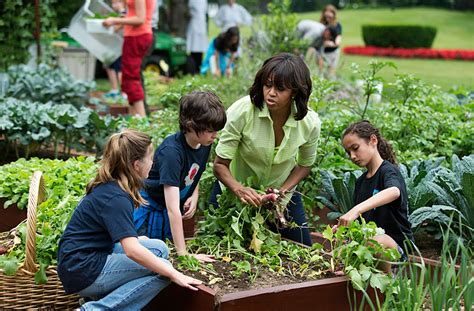 Will This Be The Last Harvest For Michelle Obama S White Obama Vegetable Garden