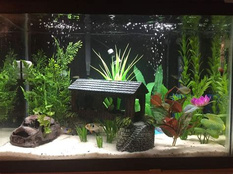 aquarium decoration ideas freshwater 25 best ideas about aquarium accessories on pinterest