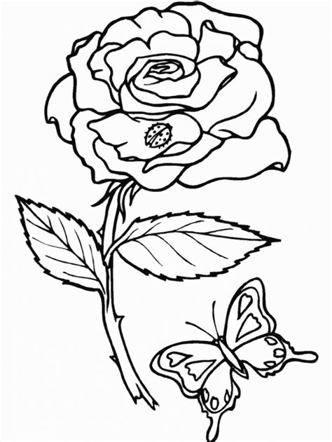 rose coloring pages pdf flower colouring pages rose flower coloring pages