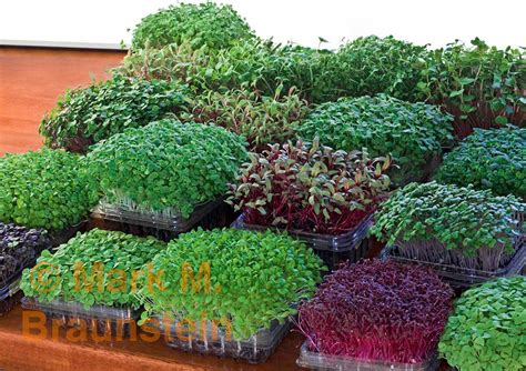 Indoor Garden Store - grow microgreens in recycled containers garden 2 pinterest