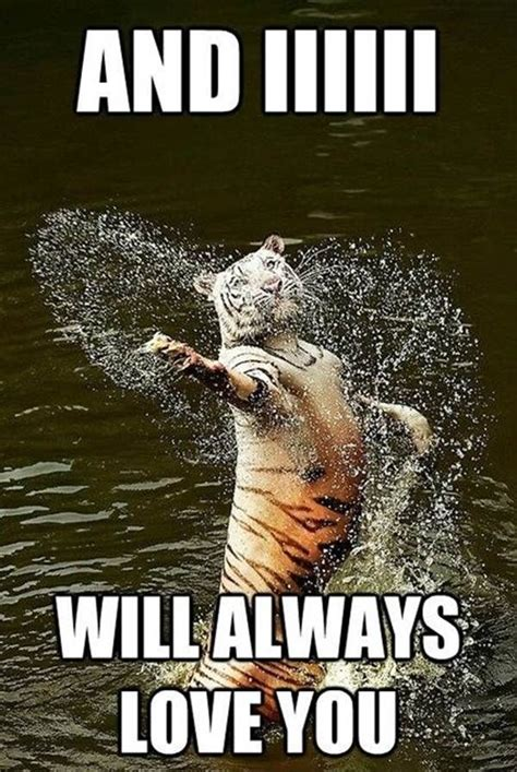 Animals Meme - 17 best ideas about funny animal memes on pinterest