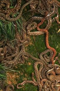 Garden Snake Island Snake Island Hangzhou China Zhejiang