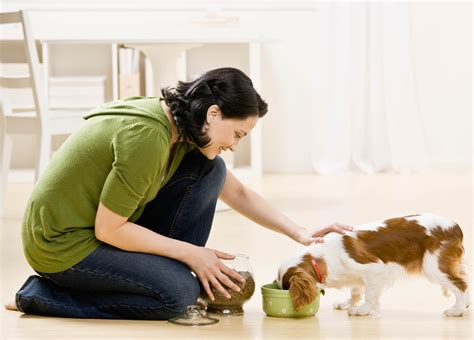 is feeding people food to pets ethical pet sitters international now accepting nominations for