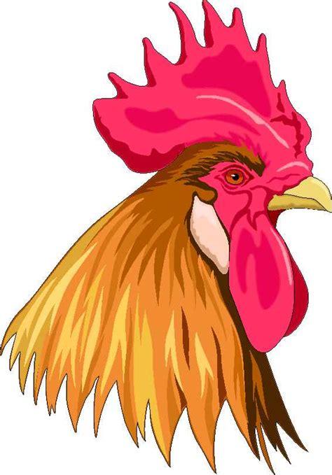 imagenes raras para descargar descarga im 225 genes de gallos clipart de gallos foto