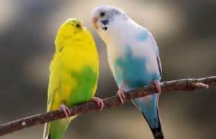 Pet Birds for Sale: Finches, Parakeets, Conures & More   PetSmart