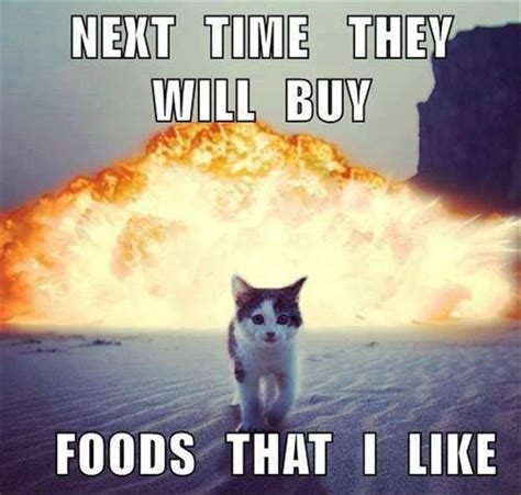 top 25 funny cat memes cutest cats