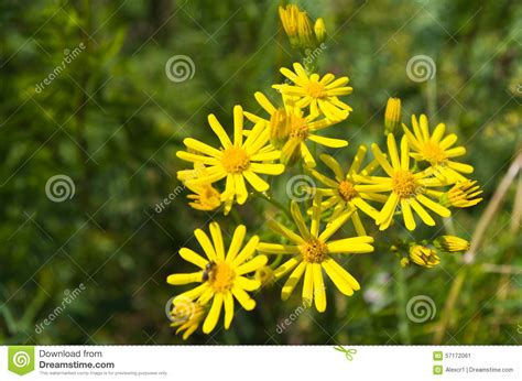 forest flowers giallo immagine stock immagine  yellow