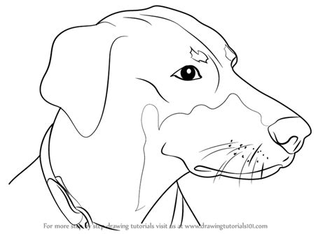 how to doberman learn how to draw doberman dogs step by step drawing tutorials