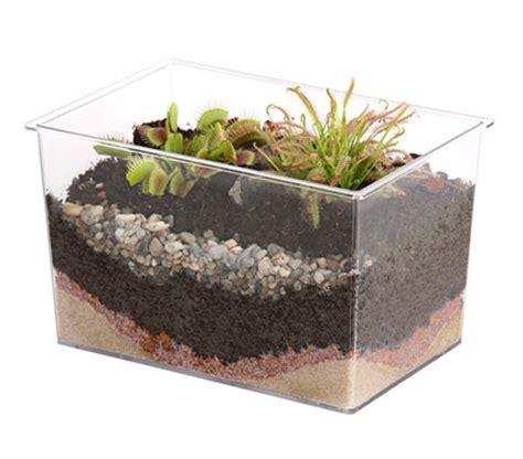 fleischfressende pflanzen kaufen fleischfressende pflanzen im aquarium dehner garten center