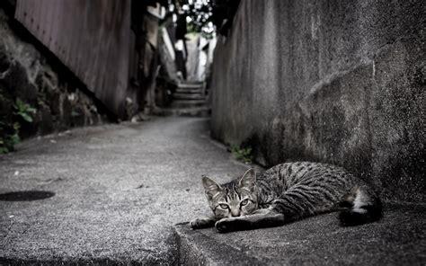 Dijamin Clear St Kitties cat wallpaper 2560x1600 177916 wallpaperup