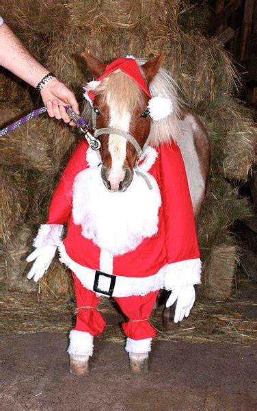 horses dressed    holidays horse nation
