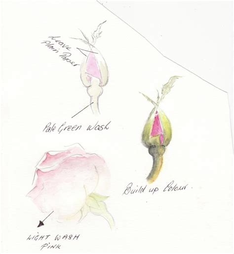 tutorial watercolor pencils 34 best how to watercolor pencils images on pinterest