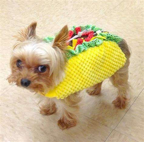 taco puppy let s all dress up like tacos for huffpost
