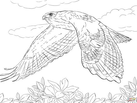 hawk coloring pages hawk coloring pages kidsuki