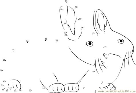printable rabbit dot to dot two rabbits together dot to dot printable worksheet