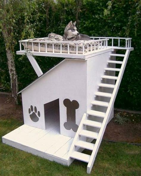 cool dog houses daily picdump 380