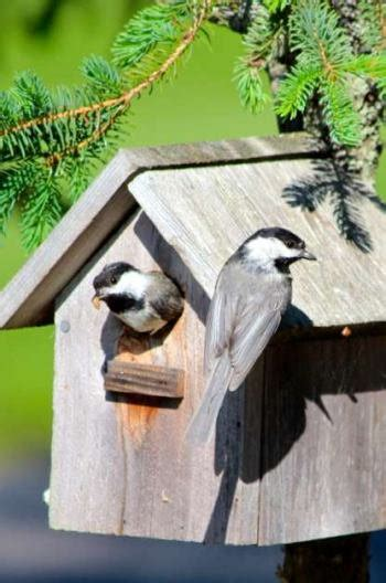 attracting nesting birds with better birdhouses birds