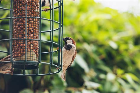 how to create a backyard birding summer oasis in st louis