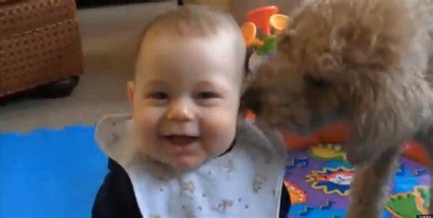 babies laughing at dogs babies laughing at dogs supercut is