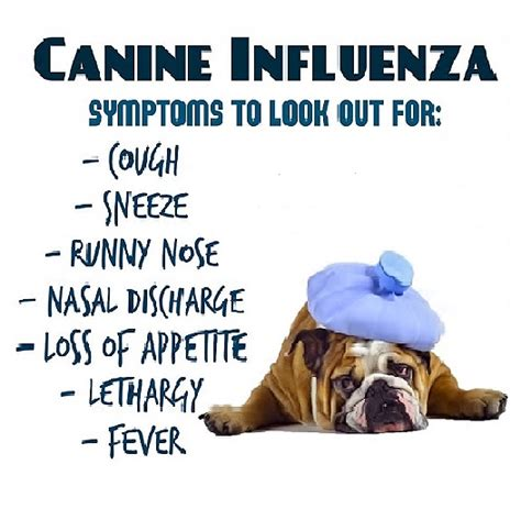 puppy flu local owners advised to their pooches vaccinated for canine influenza what