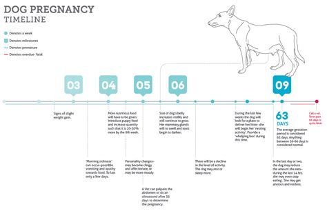 dogs gestation period understanding the gestation period for dogs not in the housenot in the house