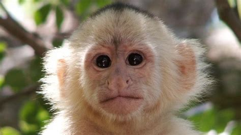 what is the scientific name for a what is the scientific name for a monkey reference