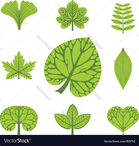 different types of trees stock vector art 635949946 istock different types of leaves royalty free vector image