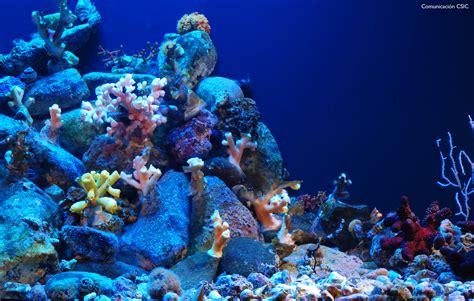 imagenes para fondo de pantalla del mar image gallery imagenes fondo del mar