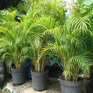 Pot Kecil Utk Tanaman Mungil 10 Biji 5 jenis tanaman pembersih udara di dalam rumah journey of destiny