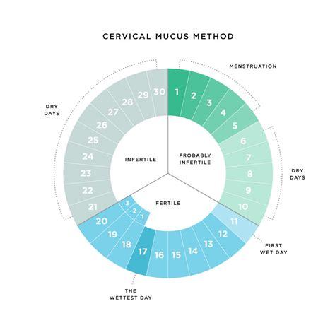 cervical mucus   conception