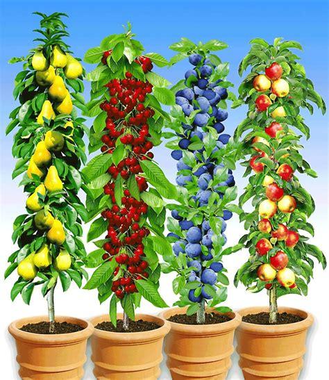 www baldur garten de s 228 ulenobst kollektion top pflanzen kaufen baldur garten