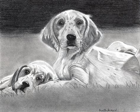 setter dog drawing english setter puppies dog drawing by olde time mercantile