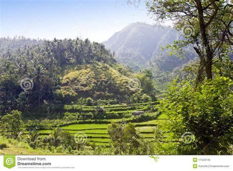 landscape design bali indonesia tropical landscape indonesia bali royalty free stock