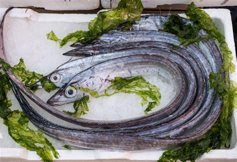 come si cucina il pesce spatola pesce spatola la cucina italiana