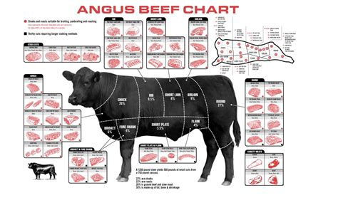 beef parts diagram cuts of beef diagrams diagram site