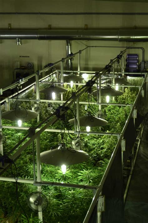 marijuana hydroponics business  light movers